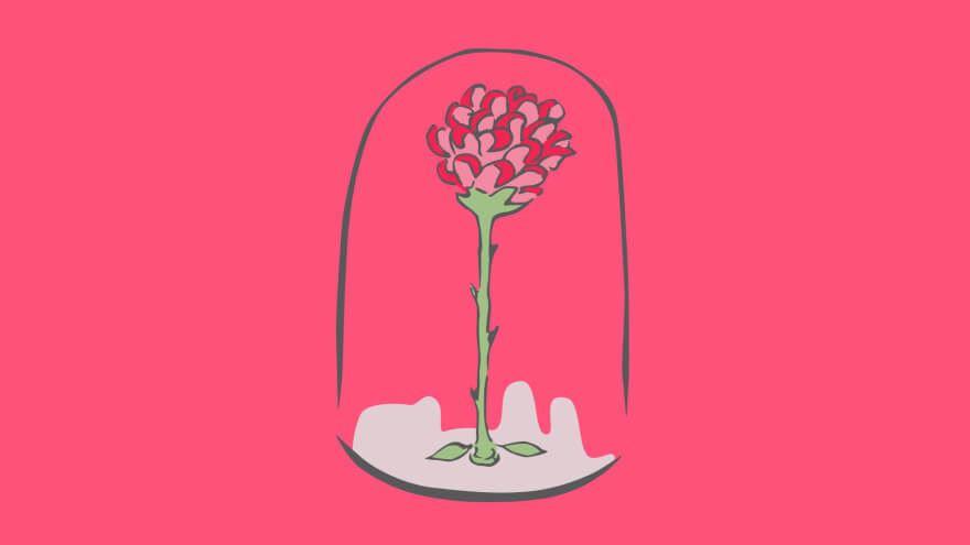 Rosa Pequeno Príncipe