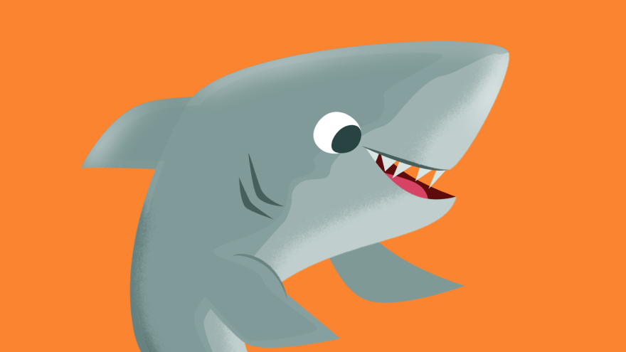 Tubarão Animais Marinhos