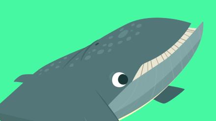 Baleia Animais Marinhos