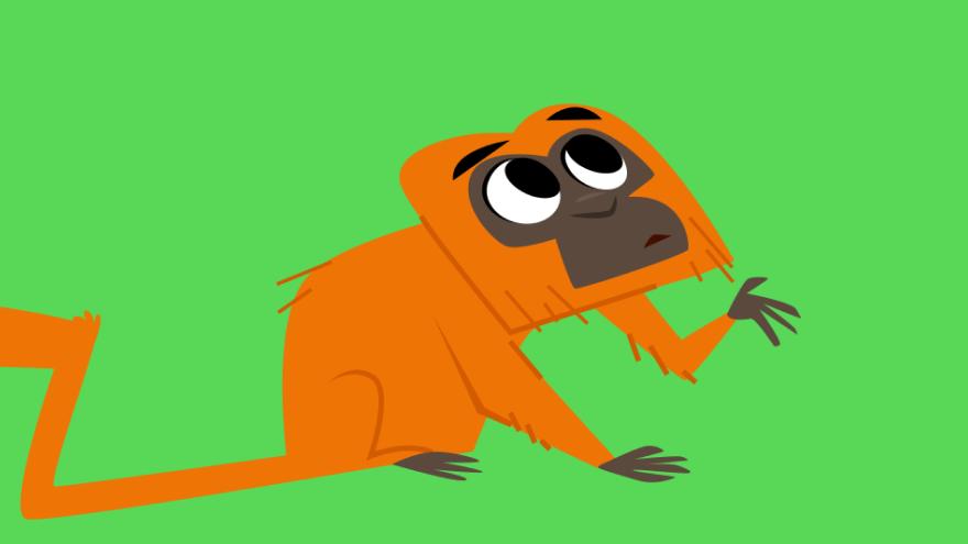 Mico-leão-dourado Animais da Floresta